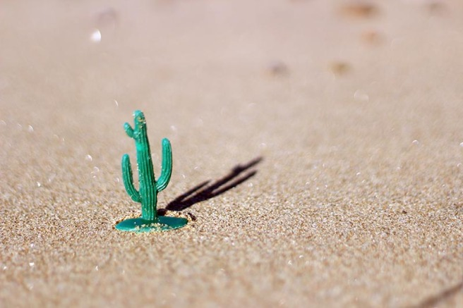 Cactus on a Beach w